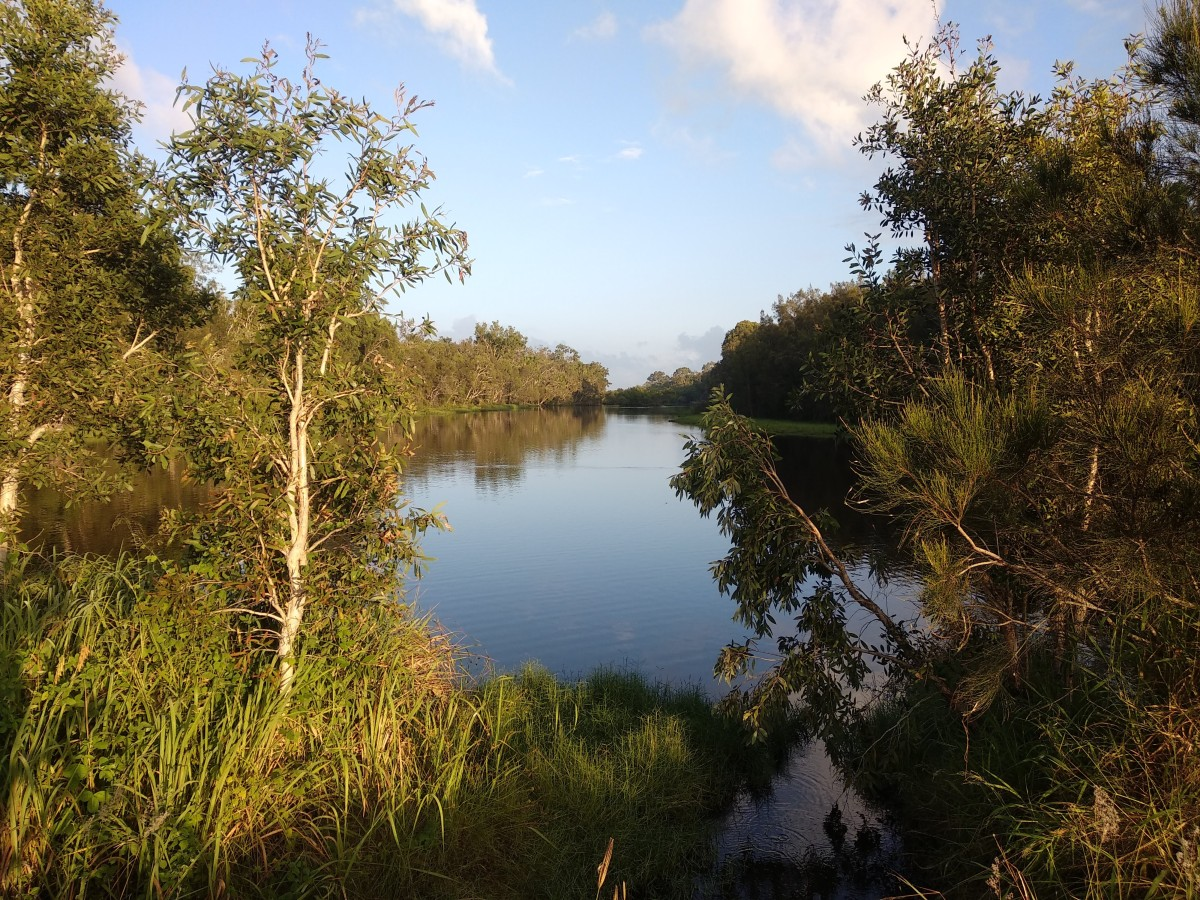 Moore Park Beach wetland
