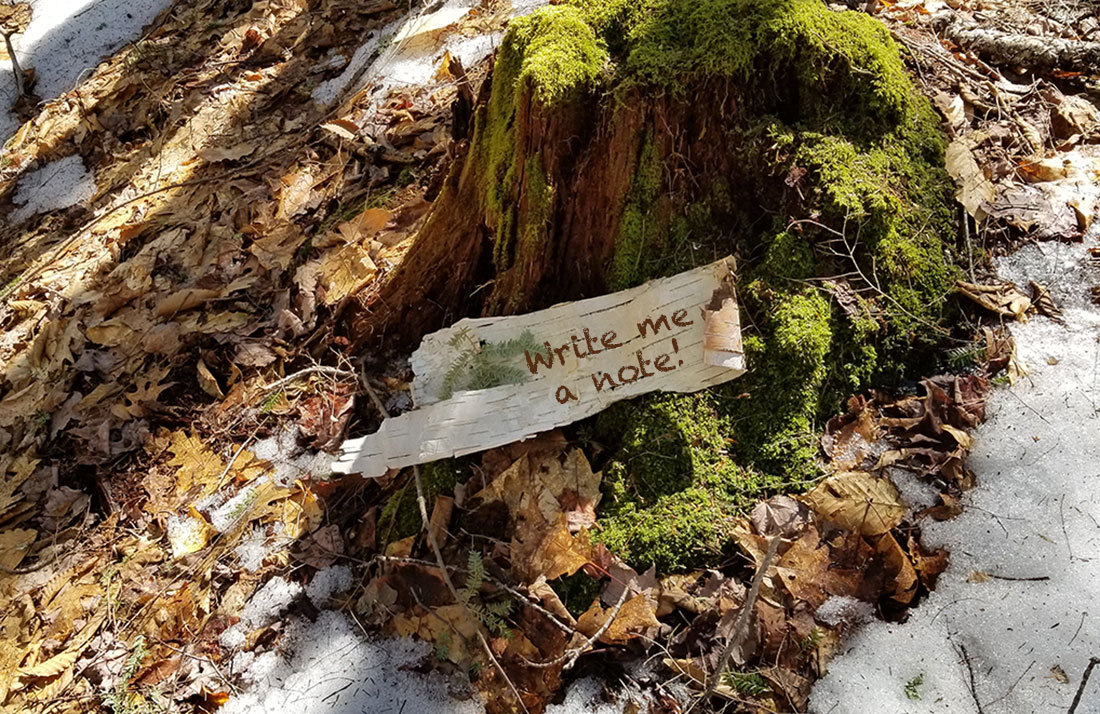 moss covered stump with birch bark sign to write a note!